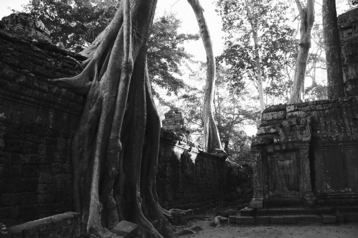 Angkor - Ta Prohm – Version 2